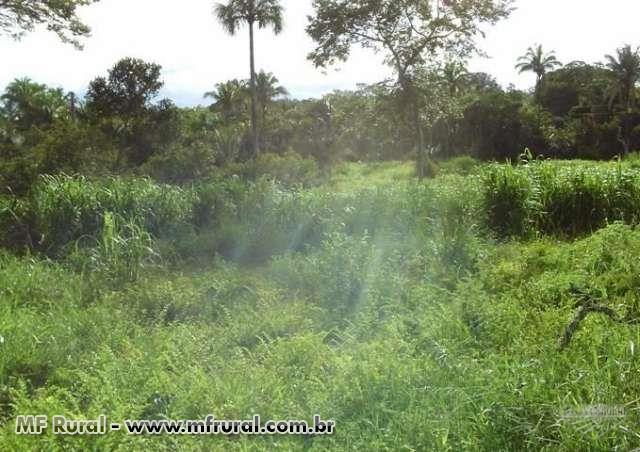 Fazenda prazo parcelada R$ 250,00 mensal