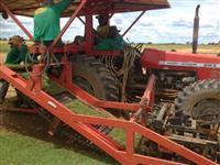 Colhedeira de Grama em tapete REMAQ 2012 com trator MF 283 2006