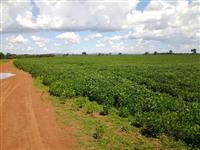 arrendo minhas terras em Goiás