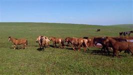 Lote de cavalos Crioulos