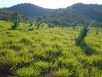 Fazenda Norte Tocantins  ( 271 hectares ) ( 56 alqueirão )