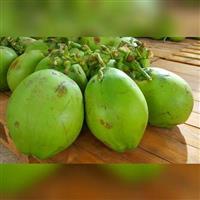 coco verde