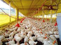 Granja de aves para arrendamento em Minas Gerais