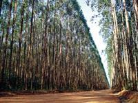Arrendo área no Vale do Paraíba e Sul de Minas Gerais