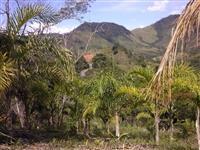 Sitio Barra do Turvo - Pupunha