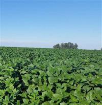 Vende-se 50 há de terra, 100% agricultável