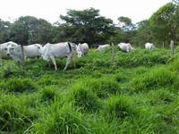 Fazenda 795 hectares nas proximidades de Rondonopolis-Mt