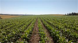 Fazenda em Santa Catarina excelente localização