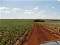 Fazenda excelente com 710 hectares, plantando 580, terra roxa e argilosa