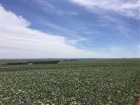 Fazenda 118 alqueires, plantando 92, terra roxa e argilosa, próximo a Campo Mourão-PR