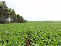 Fazenda com área total de 711 hectares plantando 540.