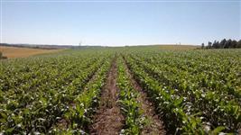 Fazenda com 217 hectares de área total, plantando soja em 130. Ótima oportunidade