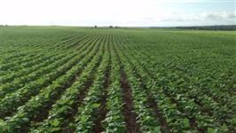 Fazenda com área de 100 alqueires plantando 75 distante 85km de Pato Branco-PR