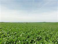 Fazenda com 711 hectares (294 alqueires) na região das Missões no RS
