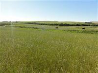 Fazenda com 70 hectares planta 65 hectares, com sede, energia elétrica, encostada no asfalto