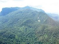 9.000 hec Mata Atlântica para Reposição Florestal, Sequestro de Carbono