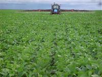Fazenda no PIAUÍ, produzindo soja a mais de 14 anos