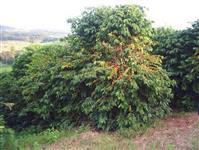 Fazenda com 281636 Hectares com Cafezais e Piscicultura