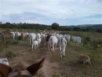 Fazenda Próximo a Luziânia as Margens do Corumba III - 358ha