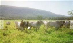 Fazenda com 828Ha de Porteira Fechada