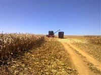 Fazendas Grandes ou Pequenas, Para Lazer, Investimento ou Trabalho