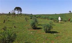 Fazenda de 300Hc em Campo Belo do Sul - SC