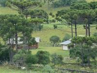 Fazenda de 250HC em Santa Izabel, São Joaquim - SC