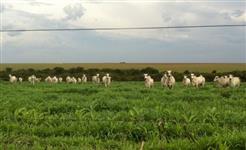 Fazenda super localizada no TOCANTINS