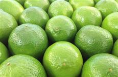 Fornecedor de limão tahiti