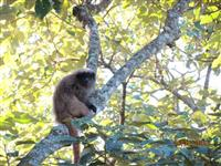 Laudo de fauna; levantamento e monitoramento de fauna