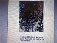Mudas de Açaí - Cultivar BRS - Pará