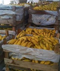 Banana direto da fazenda