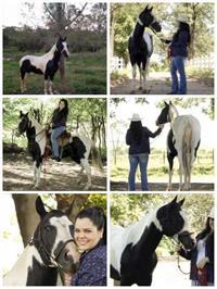 Vendo Garanhão Paint Horse
