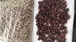 Microlotes de café 100% arábica - bebida dura e bebida mole - despolpado e natural