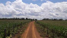 Fazenda no Maranhão,  oportunidade de 1200 hectares,  em excelente localização plantando milho