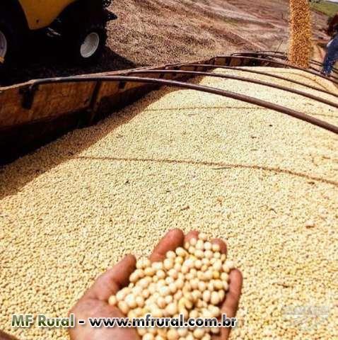 Farelo de soja, casca de soja peletizada, casca de algodão, milho, sorgo, dentre outros.
