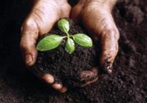 Excelente fertilizante orgânico, sem adição de terra e sementes