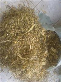 Silagem de Milho em Pernambuco