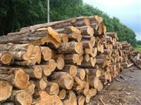 Compro madeira Teca