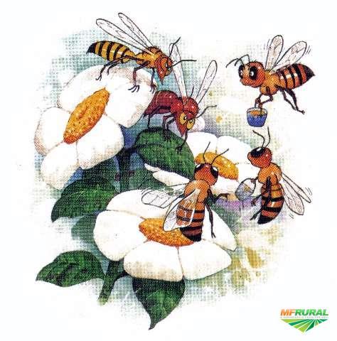 Aprendendo com as abelhas a viver em sociedade