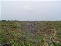 Fazenda para soja em Anapurus - MA