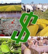Financiamento para credito rural