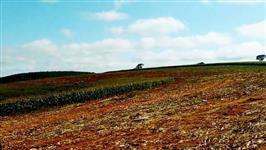 Fazenda com ótima localização