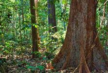 Fazenda documentada para reserva Ambiental ótimo preço
