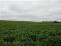 Fazenda de 308 ha