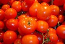 Tomate Grape