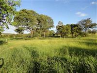 Fazenda 50 hectares toda formada entre Baldim e Jequitibá-MG