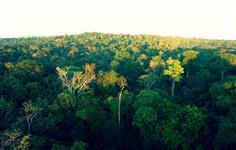 Área no Amazonas com ICMBIO de 30 mil a 800 mil hectares