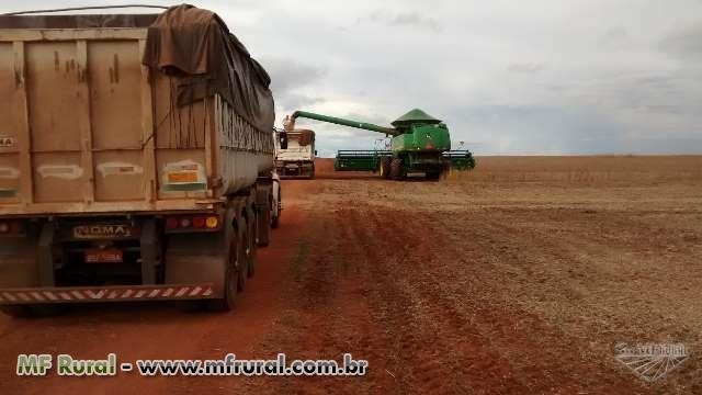 Terceirização de Colheitadeiras para a colheita de soja