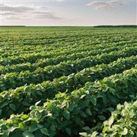 Fazenda de 1505.00 ha para plantio de soja no Tocantins